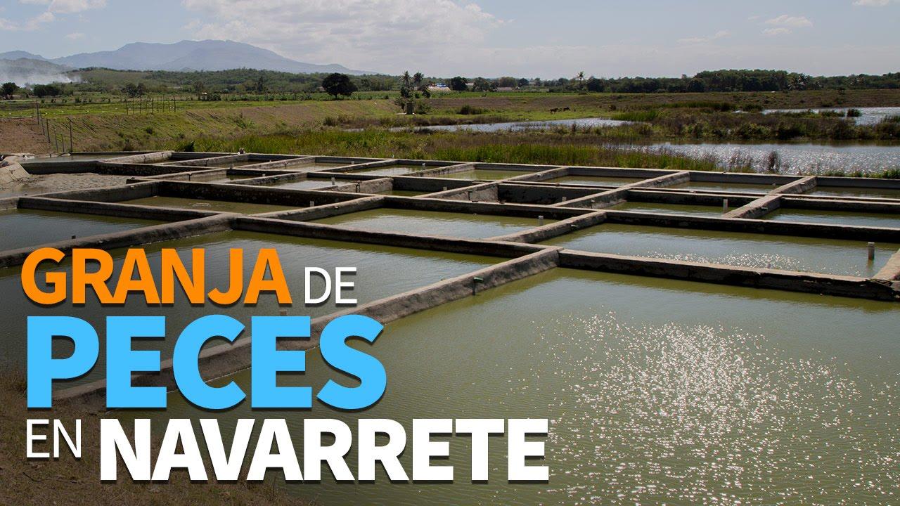 Granja de peces en navarrete youtube for Criadero de peces en casa