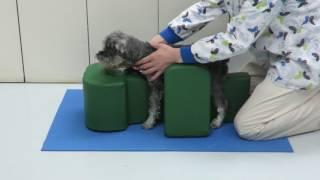 姿勢サポートクッション 医院でのご使用例-3