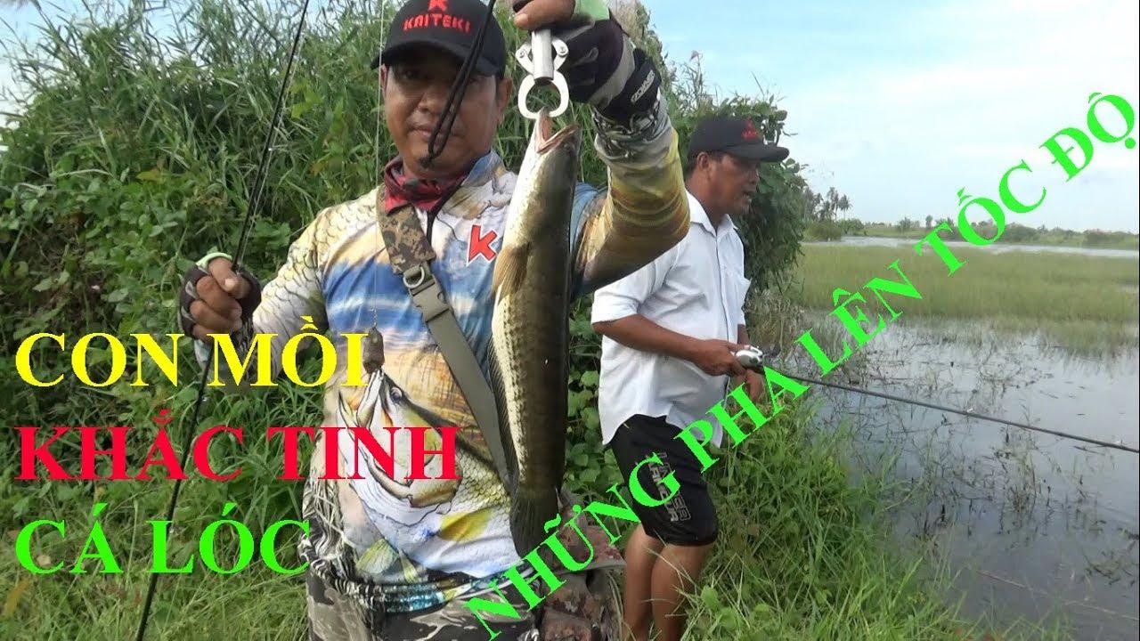 Câu cá lóc, chia sẽ cách câu cá lóc và con lure Frog Toon V4 khắc tinh cá lóc –  Pou Phung Fishing