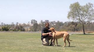 How To Discipline Dogs That Are Fighting : Dog Training & Behavior