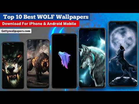 10 ➽ Wolf Wallpapers ! Photos ! Images ! Pictures Download