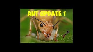 Ants | Showing them off