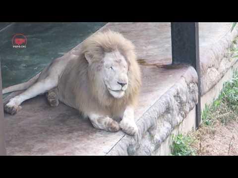 aneka-satwa-batu-secret-zoo-jawa-timur-park-2-part-2