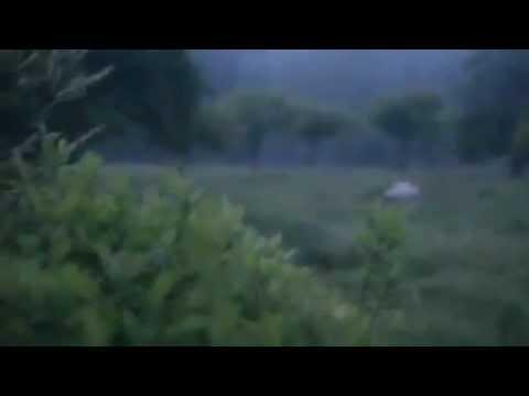 Best Lightning Bug Video YouTube