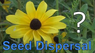 How Do Plants Move? 5 Methods Plants Use for Seed Dispersal!