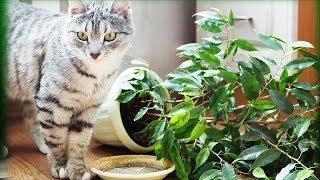 Кот портит растения? Как защитить комнатные растения от кошки.