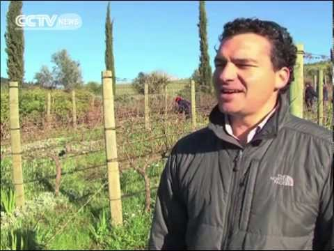 South Africa: Classical Music For Better Wine Production?