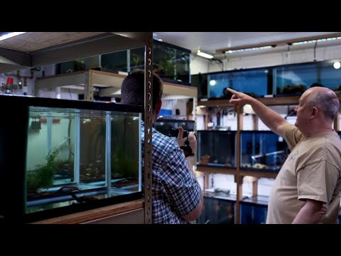 Wild Caught Discus Fish Room Tour