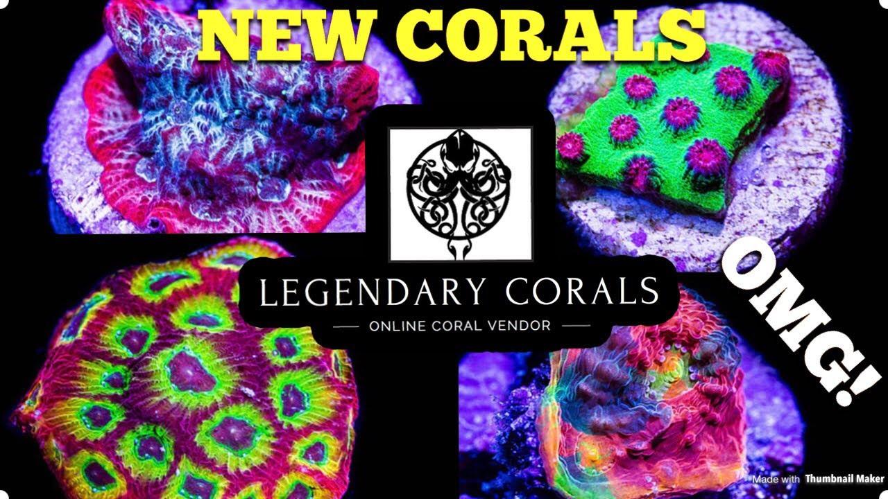 New Corals Legendary Corals