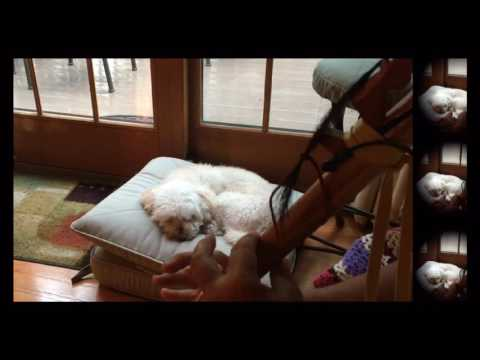 """To Dream In Peace """"NA song for my dog Bailey"""""""