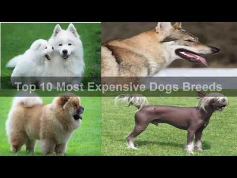 world's-most-expensive-dogs-2016