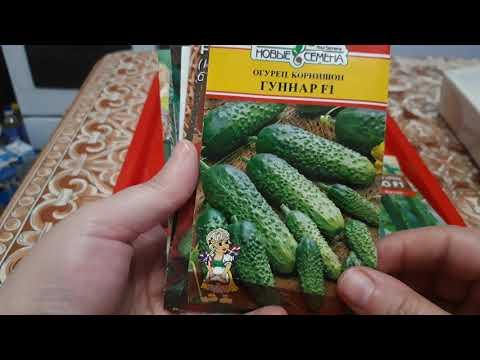 Огурцы. Самый легкий и простой способ посева. Обзор сортов.#огурцы #семена #сорта