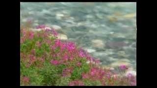Le Ruisseau De Mon Enfance  - Paul Mauriat