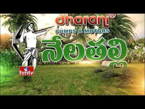 Nela Talli - Episode 106 | Future Food-Nachu | Pulses MSP Hike | Cotton Crisis in Telangana | HMTV