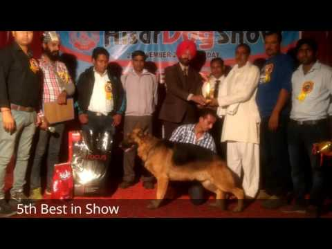 Hisar Dog Show Best in Show Results
