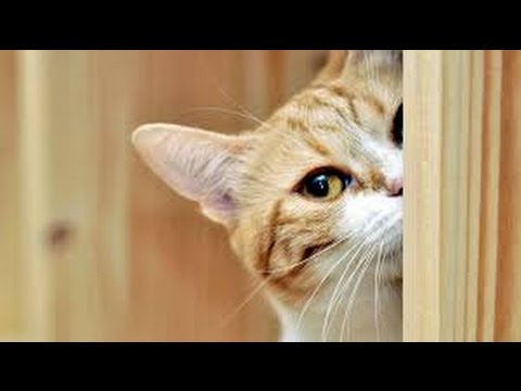 Curious cats - Funny cat Compilation 2017