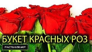 Как составить красивый букет из красных Роз ? / красивый букет цветов / красные розы(, 2015-02-17T13:48:02.000Z)