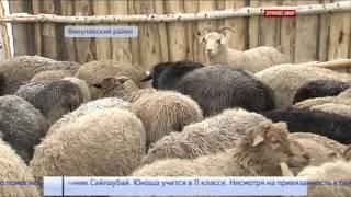 Итоги сельхозсоревнований подвели на юге Тюменской области