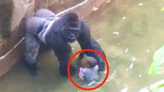 Kind fällt in Gorilla-Gehege - RIP Harambe thumbnail