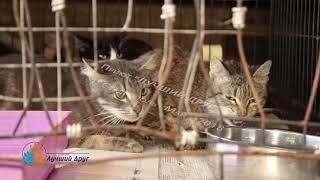 Кошки с квартиры