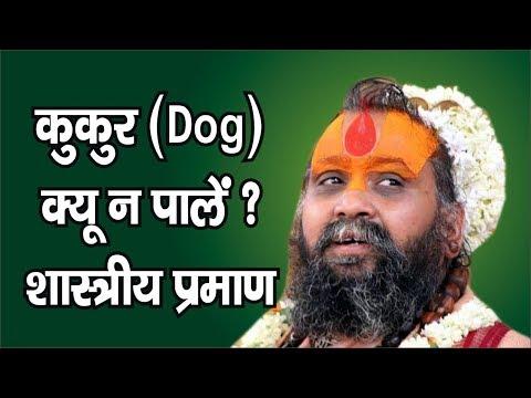 Video - https://youtu.be/MU-qZF994mA          श्री राजेन्द्र दास जी महाराज के  श्री मुख से सुनते है कि हमें कुत्ता क्यों नही पालना चाहिए है ।। कहाँ है इसकी शास्त्र में व्याख्या प्रमाण सहित ।। अवश्य सुने ।।          वृन्दावन के पेडे मंगवाये घर बैठे ही ।।