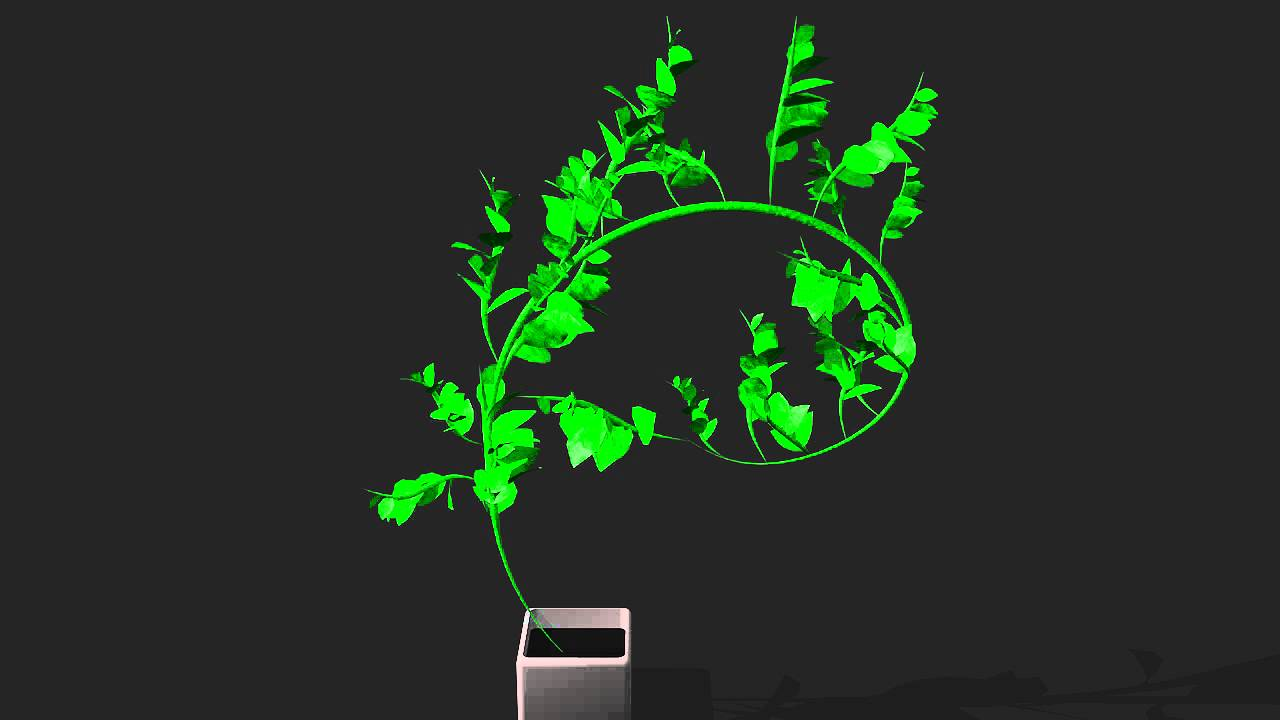 Plante qui pousse youtube for Plante qui pousse