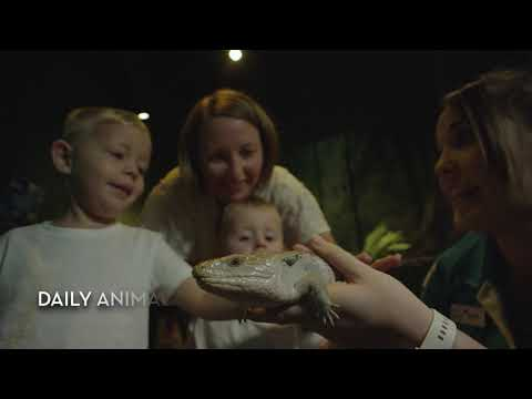 Cairns Aquarium Tickets - Video