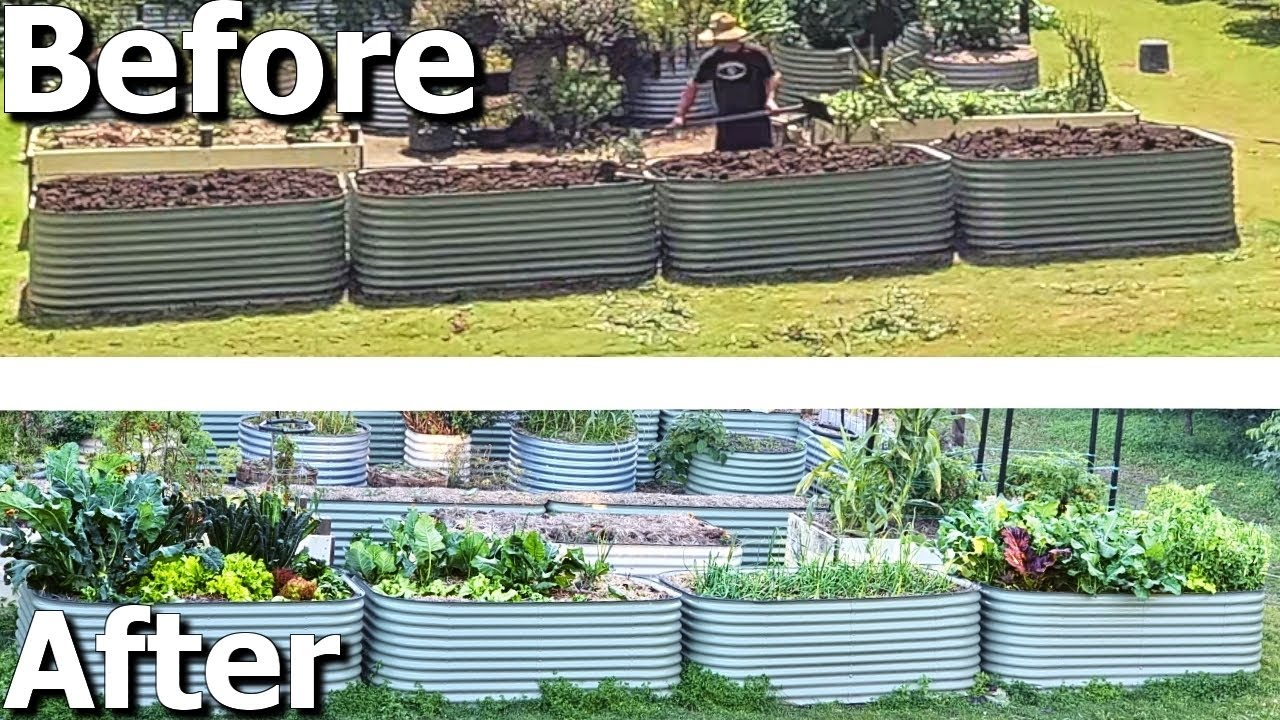 FIXED Bad Soil By Using HEAPS of Cow Manure in Raised Garden Beds