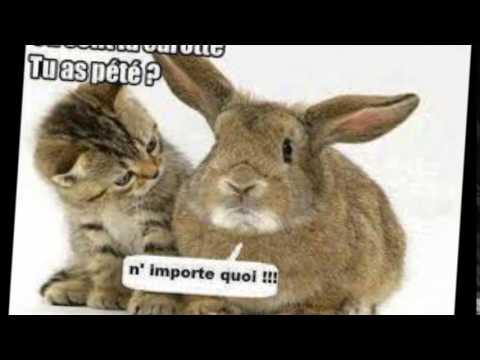 Les animaux ont de l'humour - YouTube