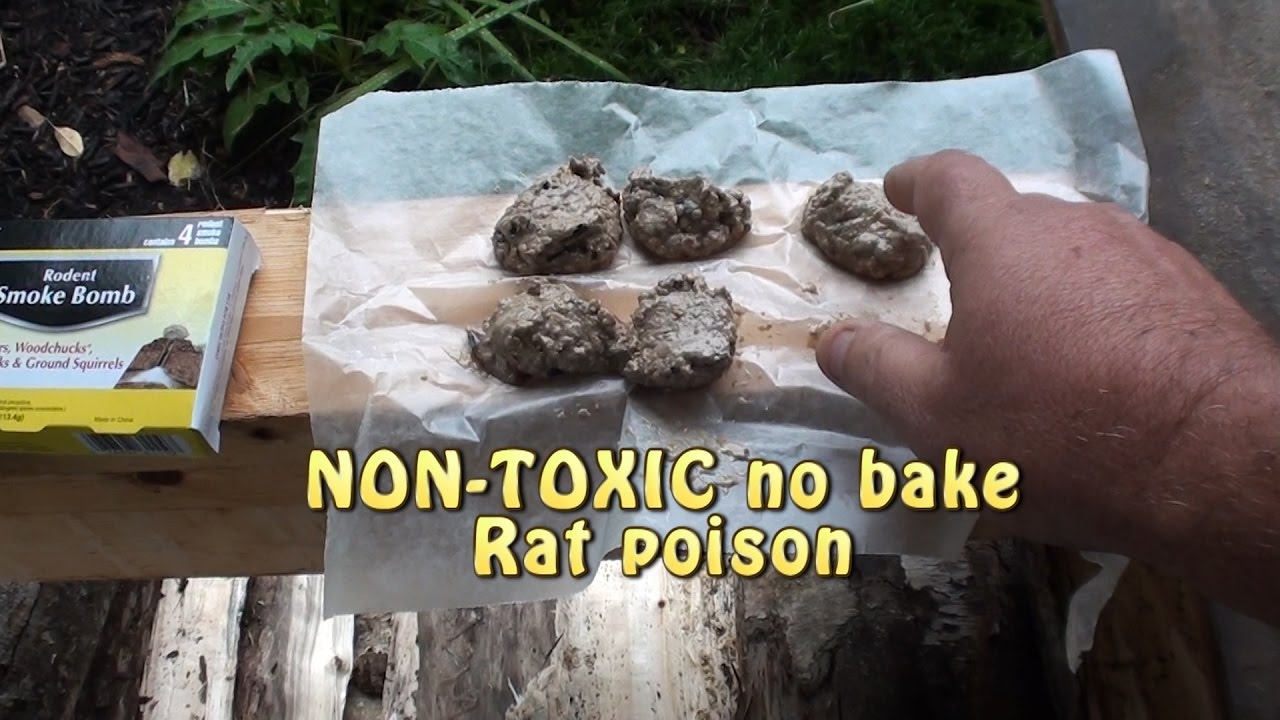 Killing RATS! What works, Non toxic