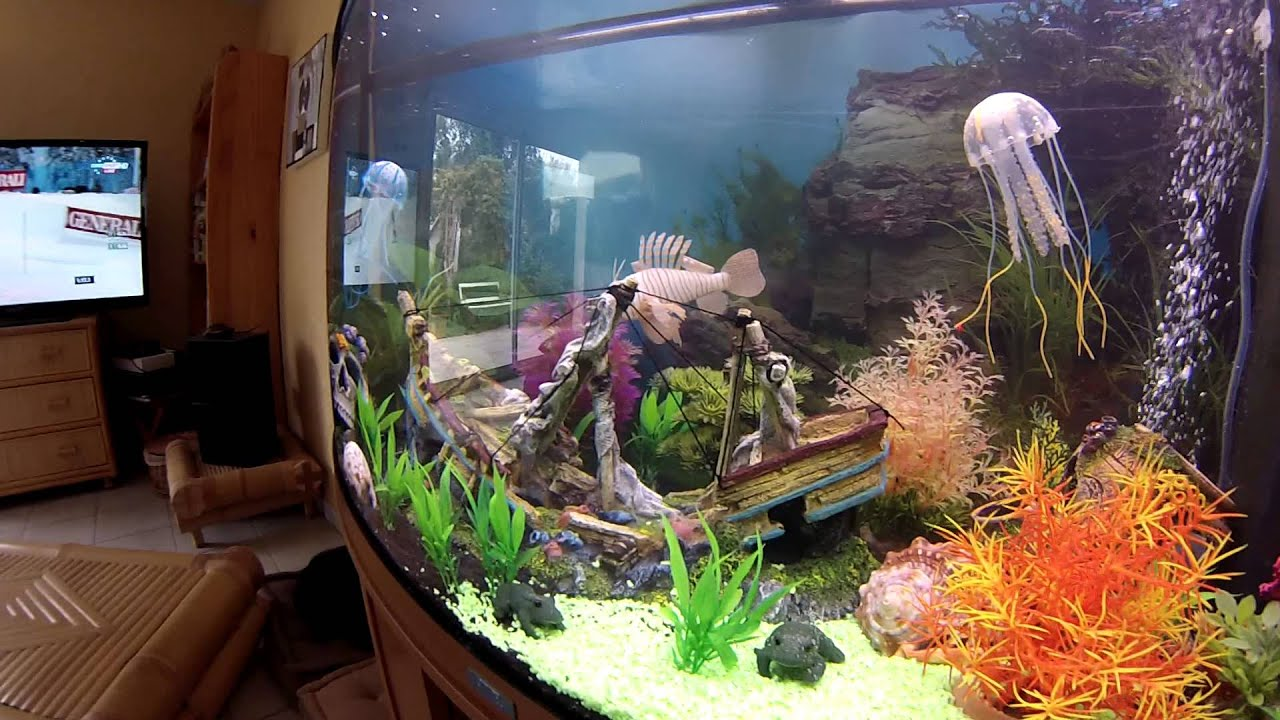 aquarium avec m duses tueuses youtube. Black Bedroom Furniture Sets. Home Design Ideas