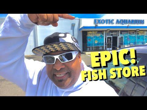 MASSIVE FISH STORE TOUR At EXOTIC AQUARIUM