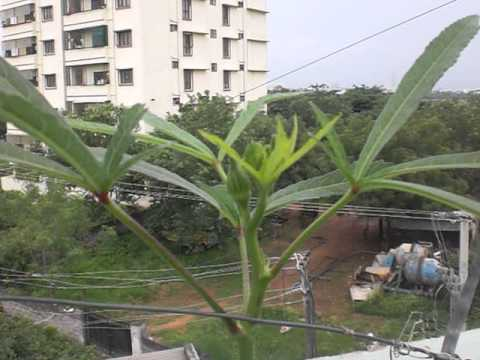 Terrace Organic garden in Hyderabad