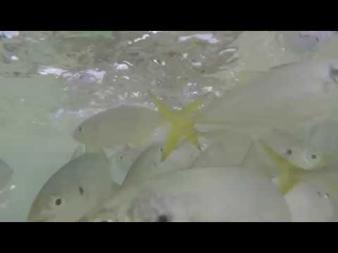 Fish watching in St Lucia smuggler cove