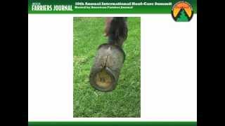 Online Hoof-Care Classrooms: Shoeing The Club-Footed Horse