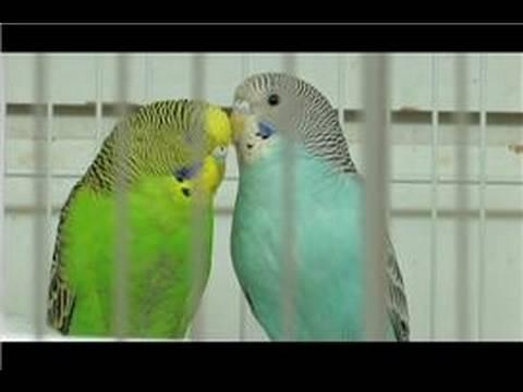 Pet & Wild Birds : How to Take Care of a Bird