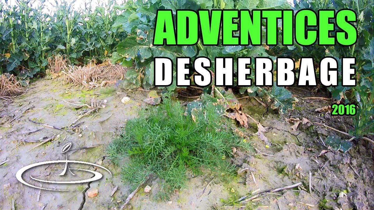 mauvaises herbes identifier pour d sherber 2016 youtube. Black Bedroom Furniture Sets. Home Design Ideas