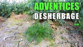 Mauvaises herbes, identifier pour désherber - 2016