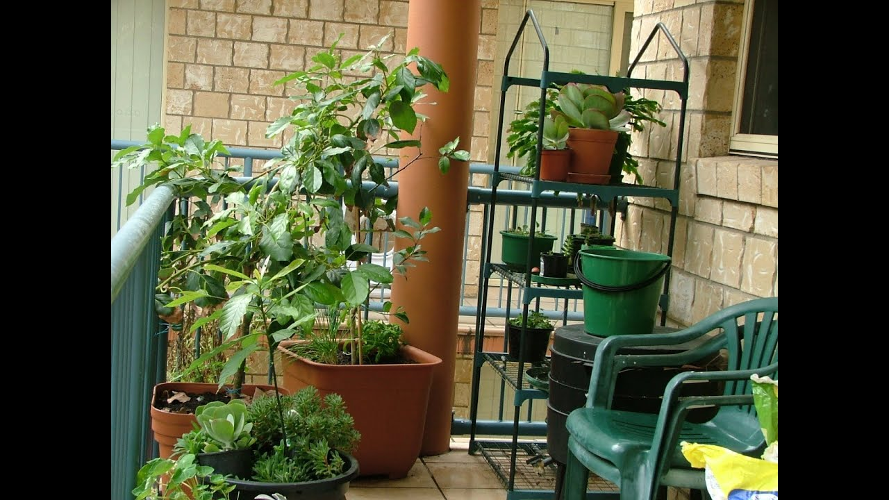 Apartment Food Container Gardening Getting Started - YouTube