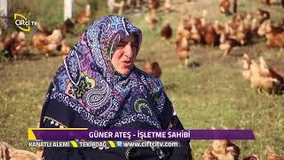 Kanatlı Alemi  - Tekirdağ - Yumurta Tavuğu Yetiştiriciliği