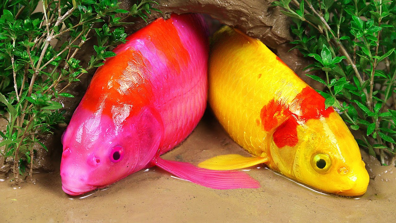 Stop Motion ASMR   True Love Colorful Koi Fish Trap Eel In The Mud Primitive Cooking Make Brain Soup