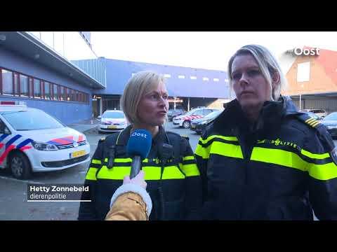 Dierenpolitie Twente geeft een kijkje in haar werkzaamheden
