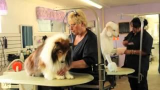 Allen's Pet Resort | Grooming | Boarding | Lodi, California