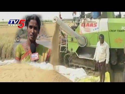 Ginger Farmer and Laxmipur Rice Farmers Success Story | Annapurna | Telugu News | TV5 News