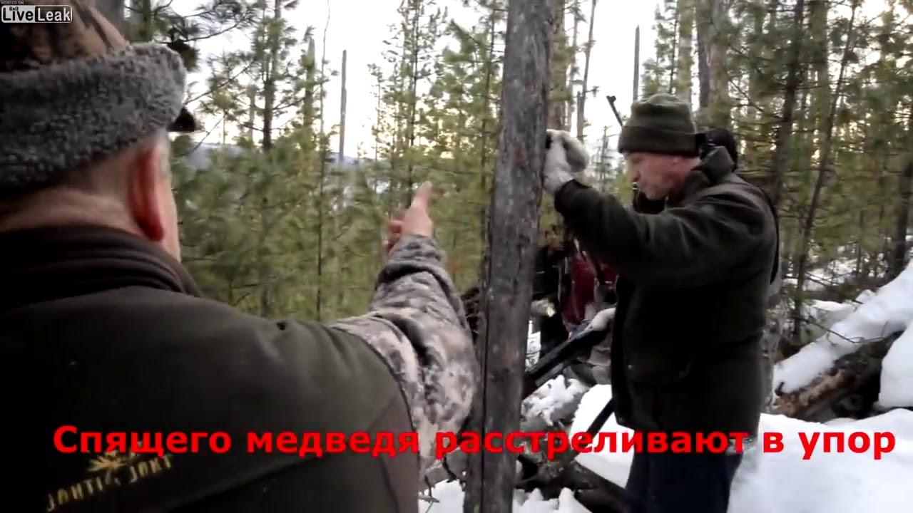 Liveleak Killed By Tree