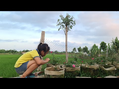 Thăm Lại Cây Hải Phòng Thân Tree Mà Tôi Tự Làm / Làm Vườn Và Hoa Hồng