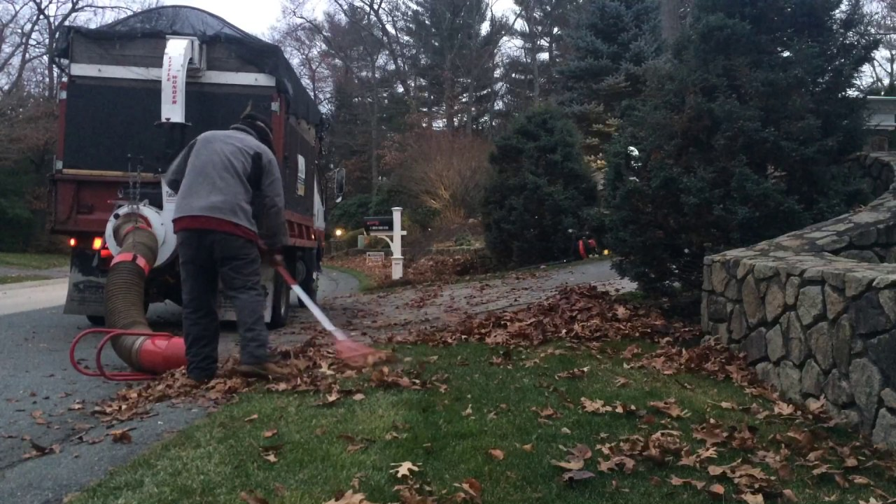 Best Way Pick Leaves