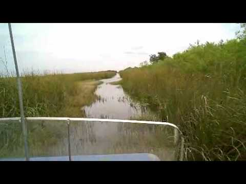 Seeing the alligators in the everglades