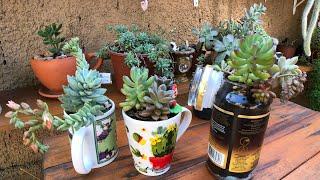 SUCULENTAS EM VIDRO DE CAFÉ – Como Furar e Plantar