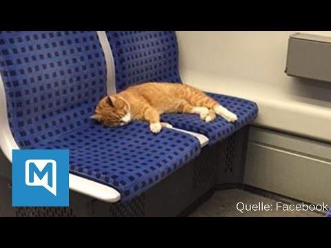 Ungewöhnlicher Fahrgast in Stuttgart: Süße Katze fährt alleine S-Bahn
